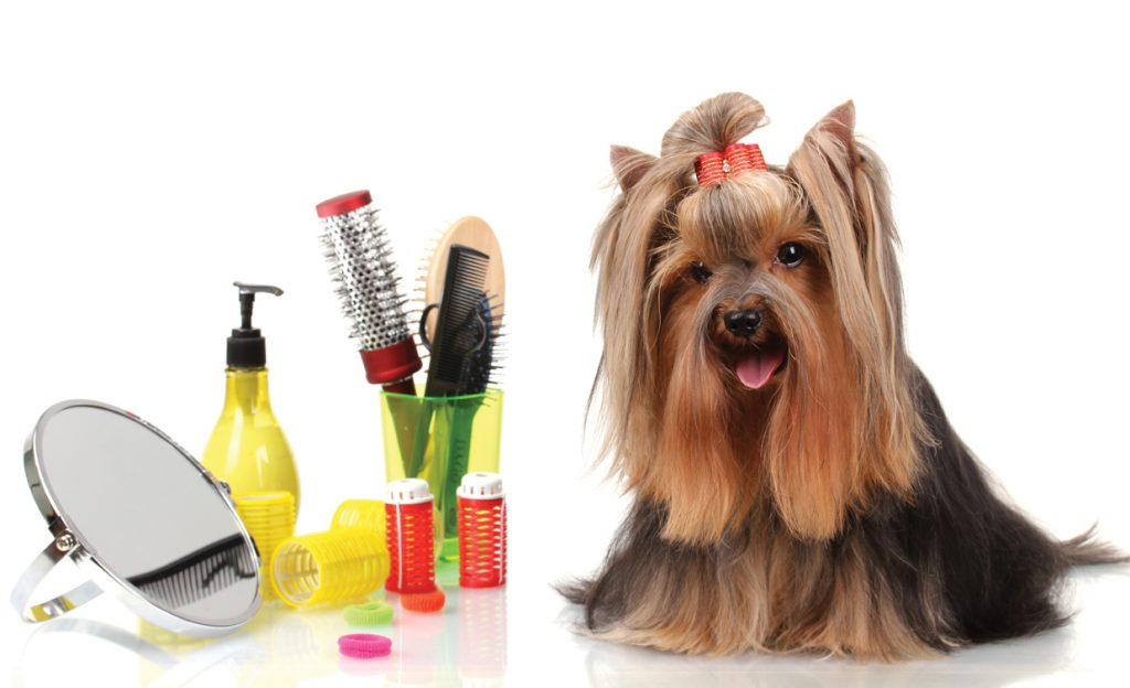 dog-grooming-kit